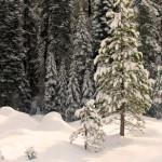 Україна взимку – фотопідбірка