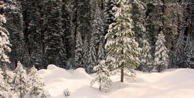 Украина зимой — фотоподборка