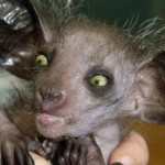 Дивовижні тварини планети Земля