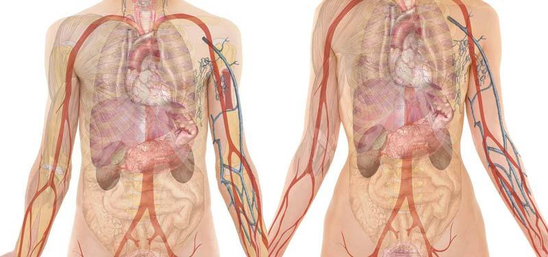 50 любопытных фактов о человеческом теле