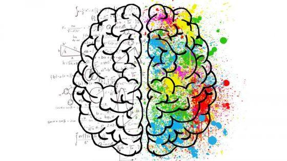 Найбільш цікаві та дивні факти про людський мозок