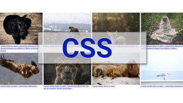 Как добиться адаптивности картинок с помощью CSS