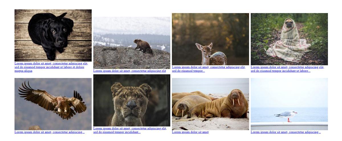 Адаптивность картинок в CSS